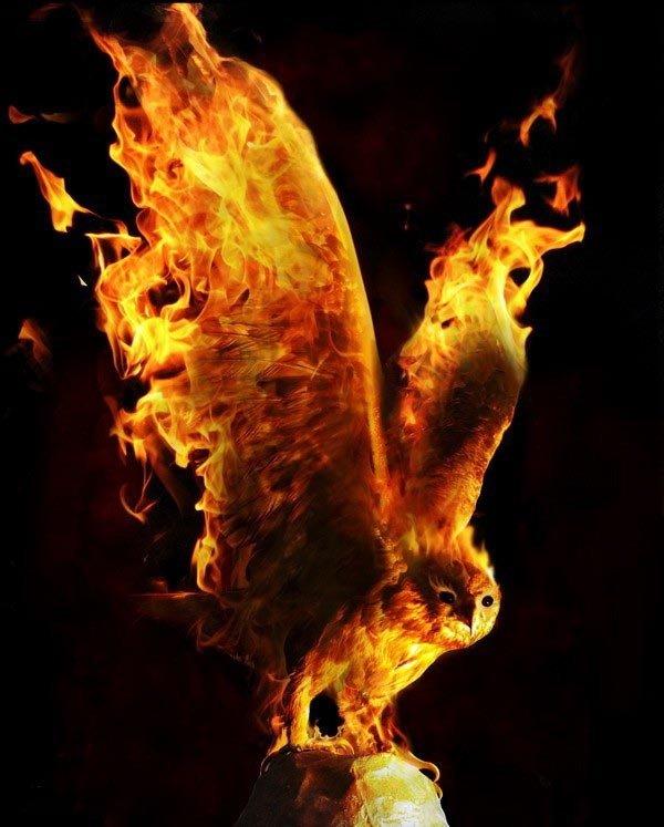fire-owl.jpg